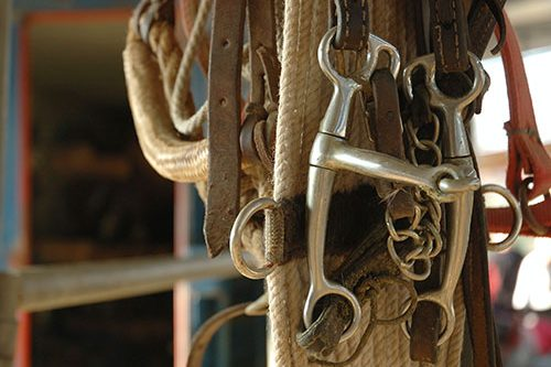 Tack and supplies hanging in a stable